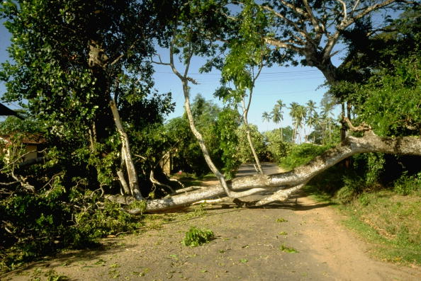 Felled trees blocking a road – the JVP attempting to foil Presidential election